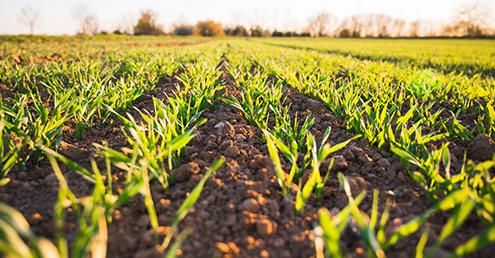 Adoria - [Décryptage] Les enjeux FoodTech pour l'agriculture et l'alimentation de demain